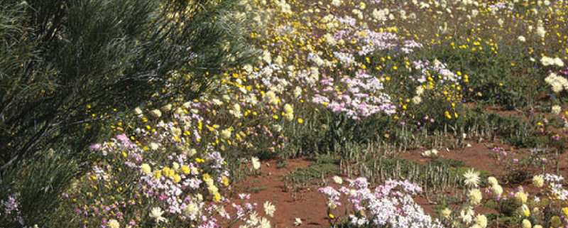 Western Australia Wildflower Areas of Interest