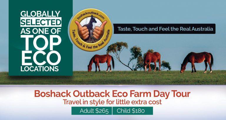 Boshack Aussie Outback Seasonal Specials